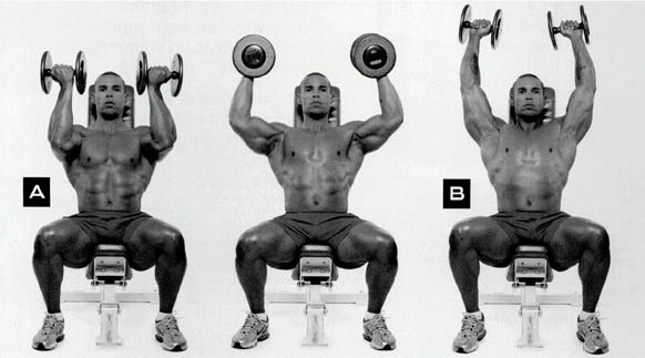Arnold-Press-shoulders-buid