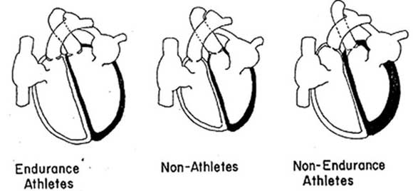 your-heart-changes-shape