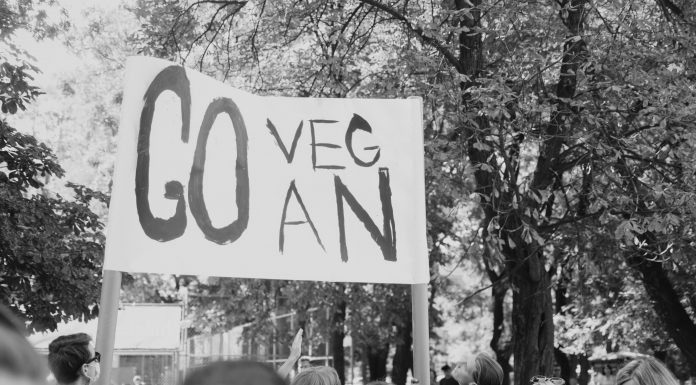 How to go vegan-Photo By Dmitry Bayer